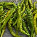 Murupi Green Chilipflanze