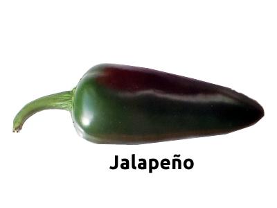 Bild Jalapeno