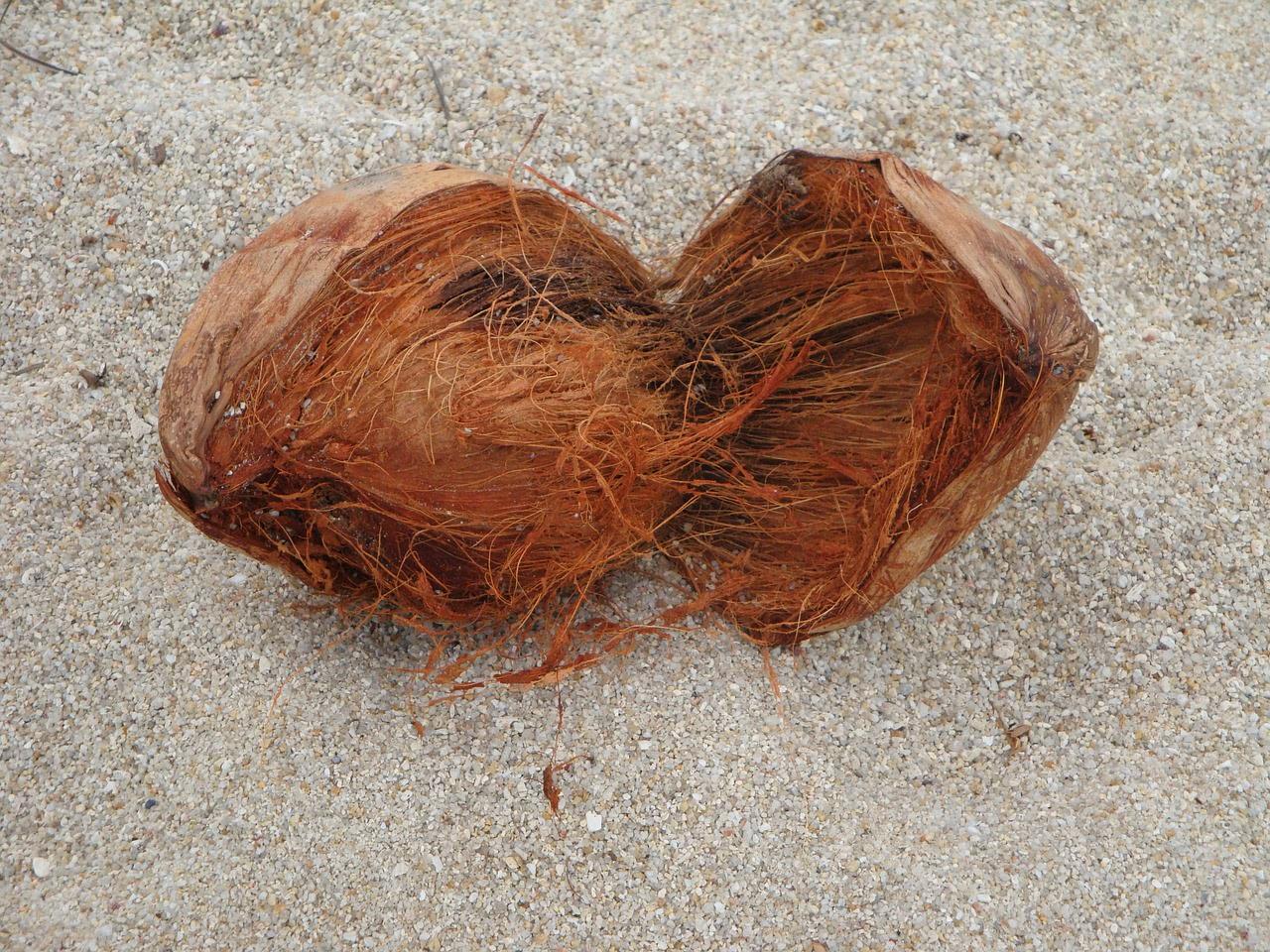 Kokosnuss Fasern