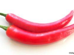 Bild Peperoni rot