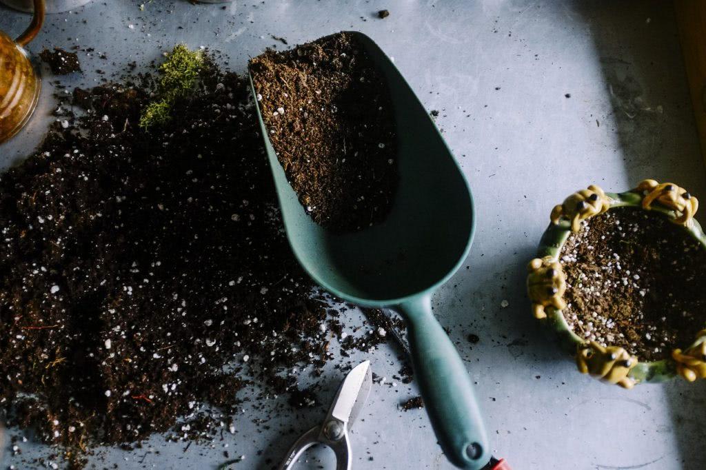Bild Chilipflanzen-Erde
