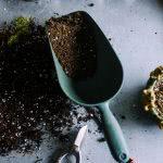 Bild Chilipflanzen Erde