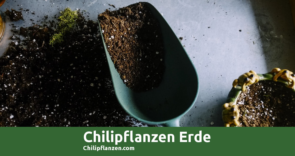 Bild Chilipflanzen Erde FB