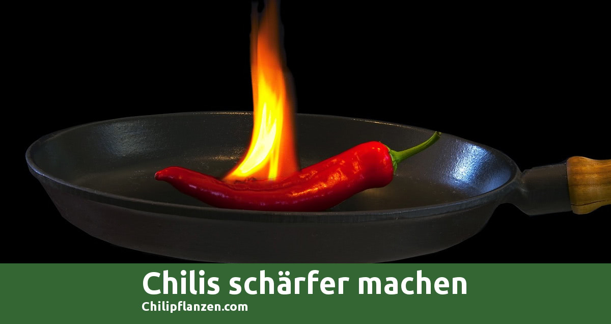 Bild Chilli Peppers schärfer machen FB