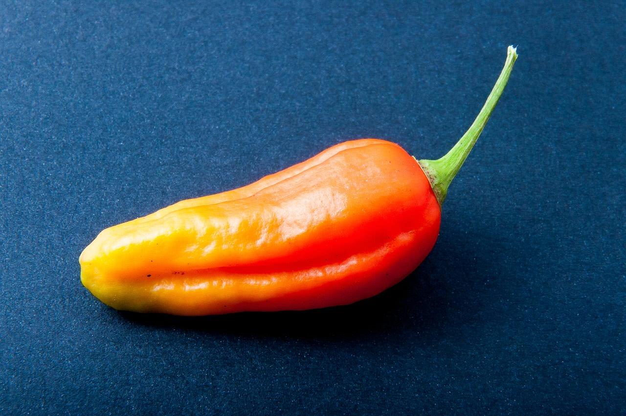Jolokia Chili