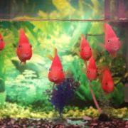Bild Aquarium mit Osmosewasser
