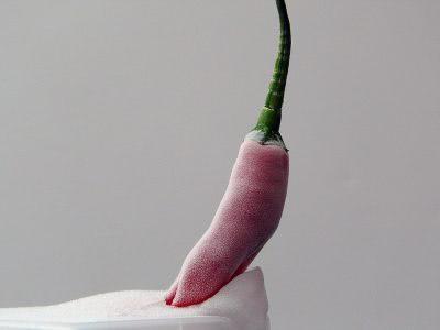 Bild Chili gefrostet