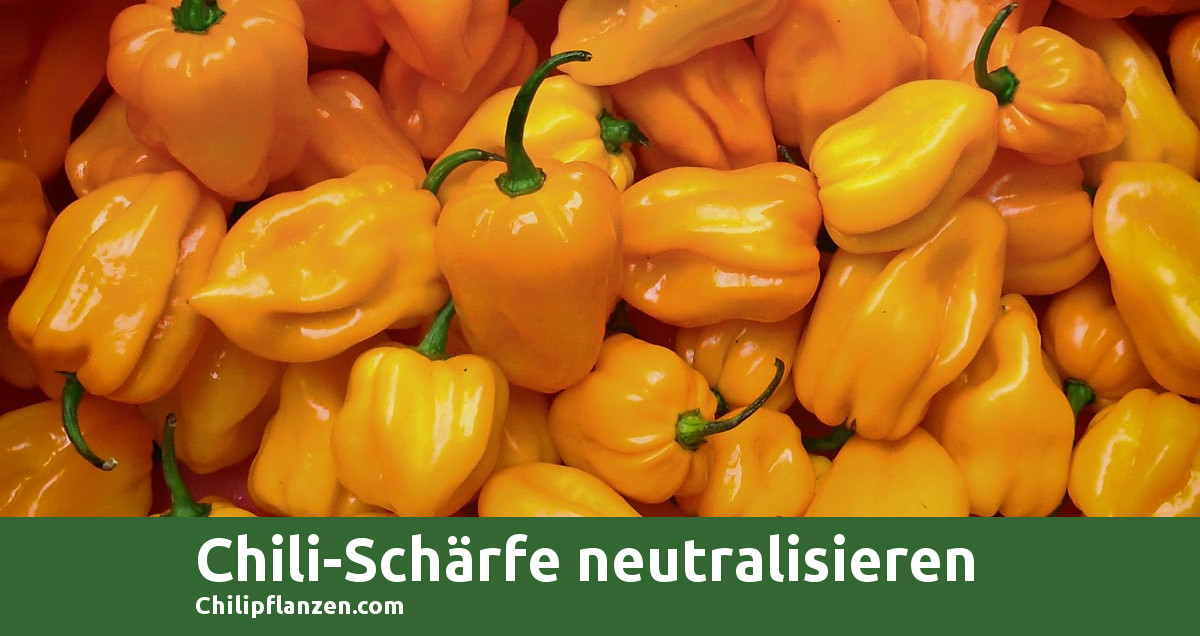 Chili Neutralisieren