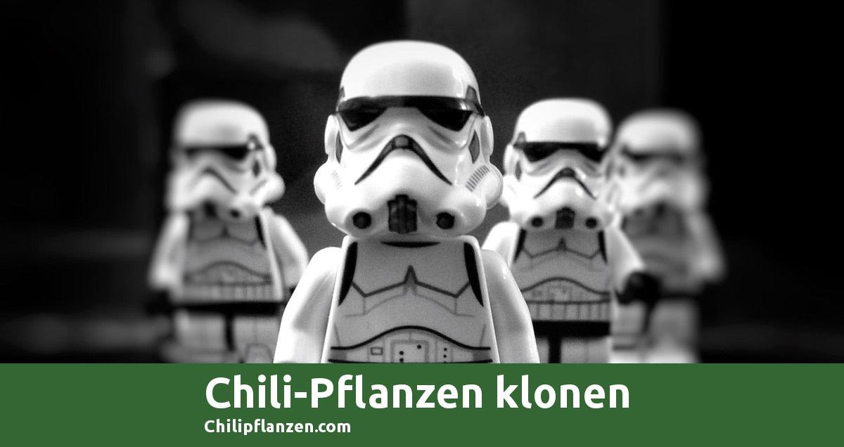 Bild Chili-Pflanzen klonen