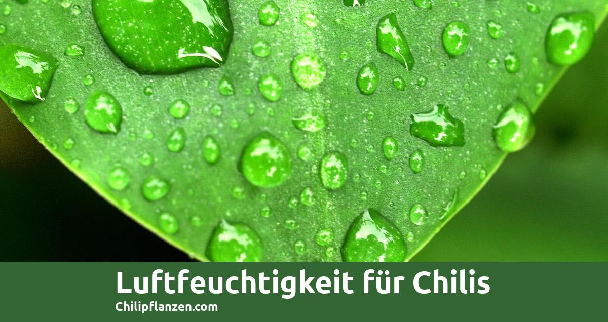 Chillis Luftfeuchtigkeit FB