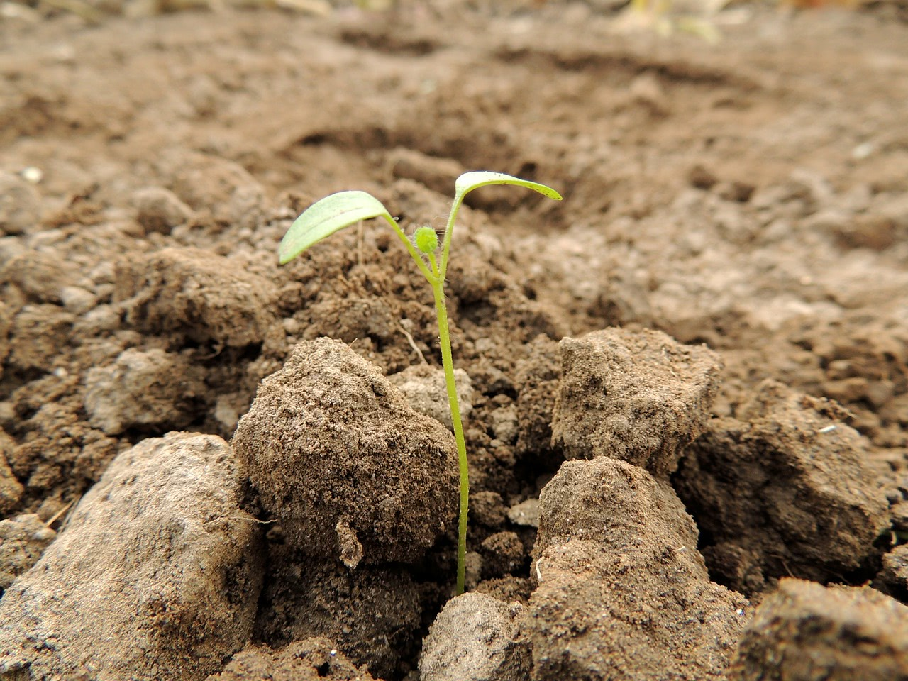 Bild von einem Pflanzen-Keimling