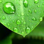 Bild Tropfen auf Blättern