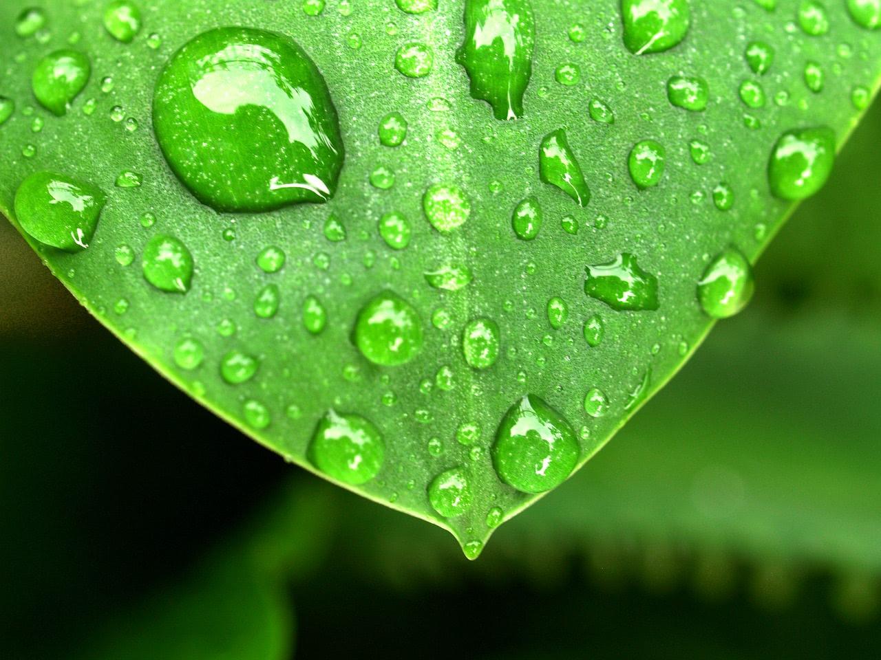 Feuchtigkeit auf Blättern