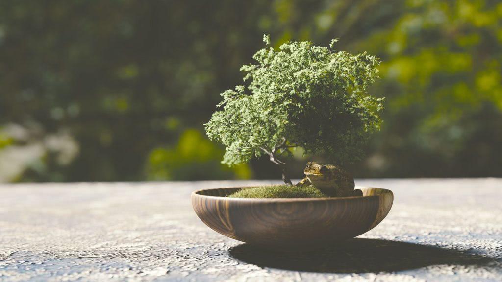 Bild Bonsai Baum