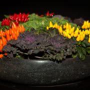 Bild Bonsai Chili Schale