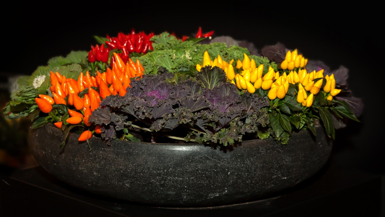 Bonsai Chili Schale