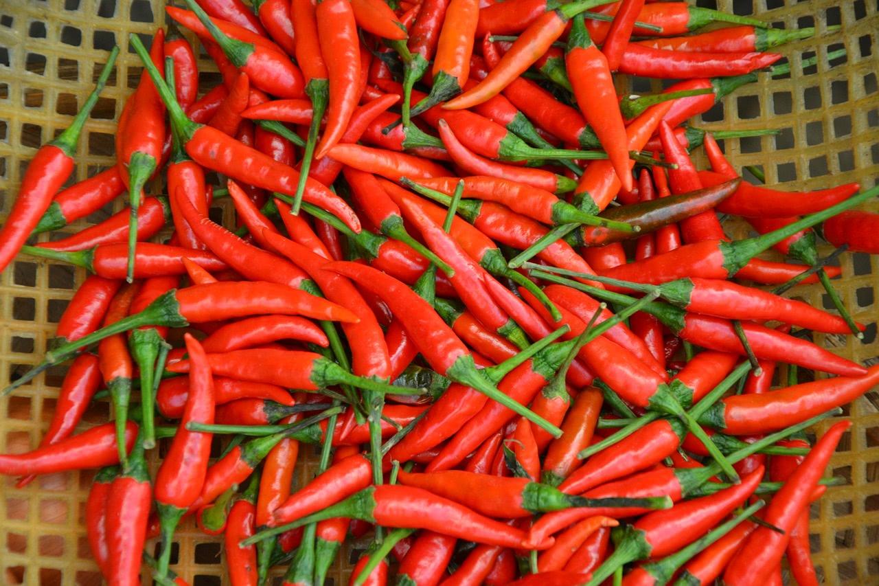 Chili Ernte
