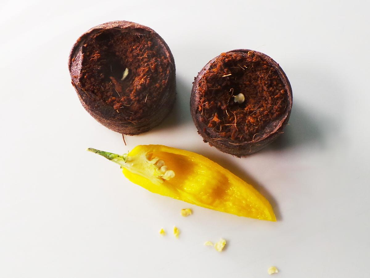 Samen aus Habanero