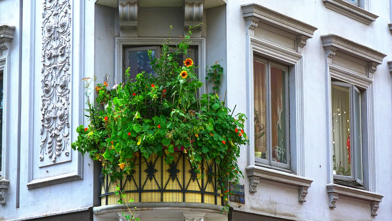 Bild Balkon Pflanzen