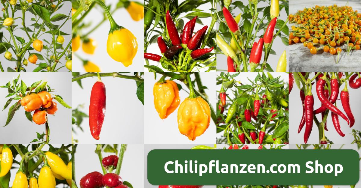 chilipflanzen.com